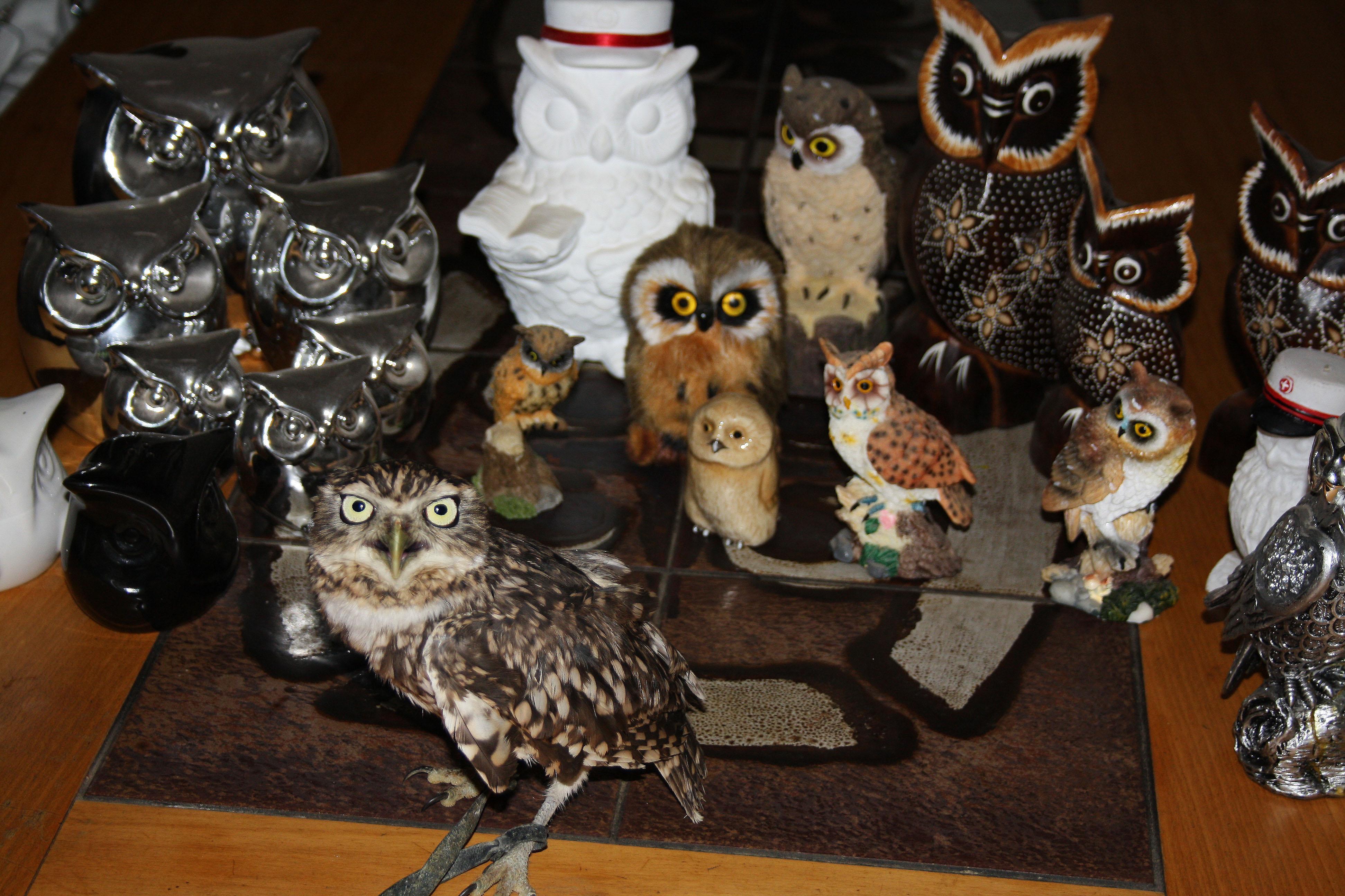 Owl Army