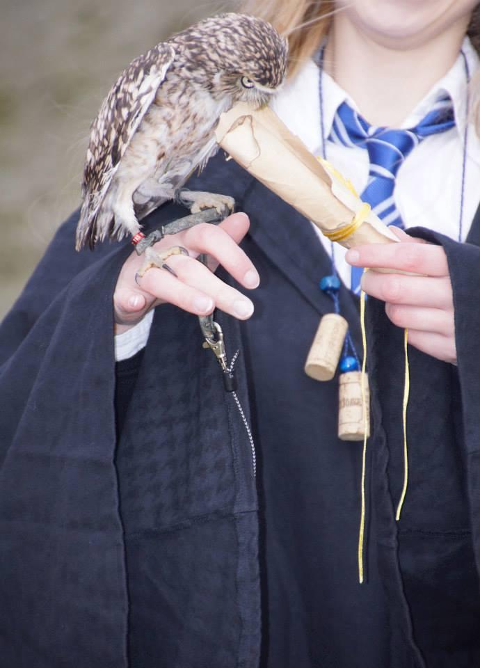 Owl Harry Potter