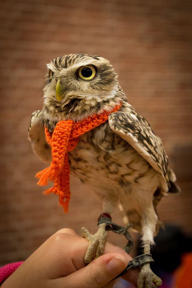 Burrowing Owl Scarf