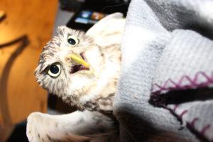 Angry owl blanket