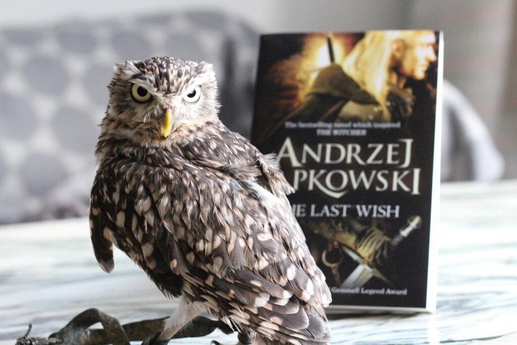 Owl The Last Wish Andrzej Sapkowski