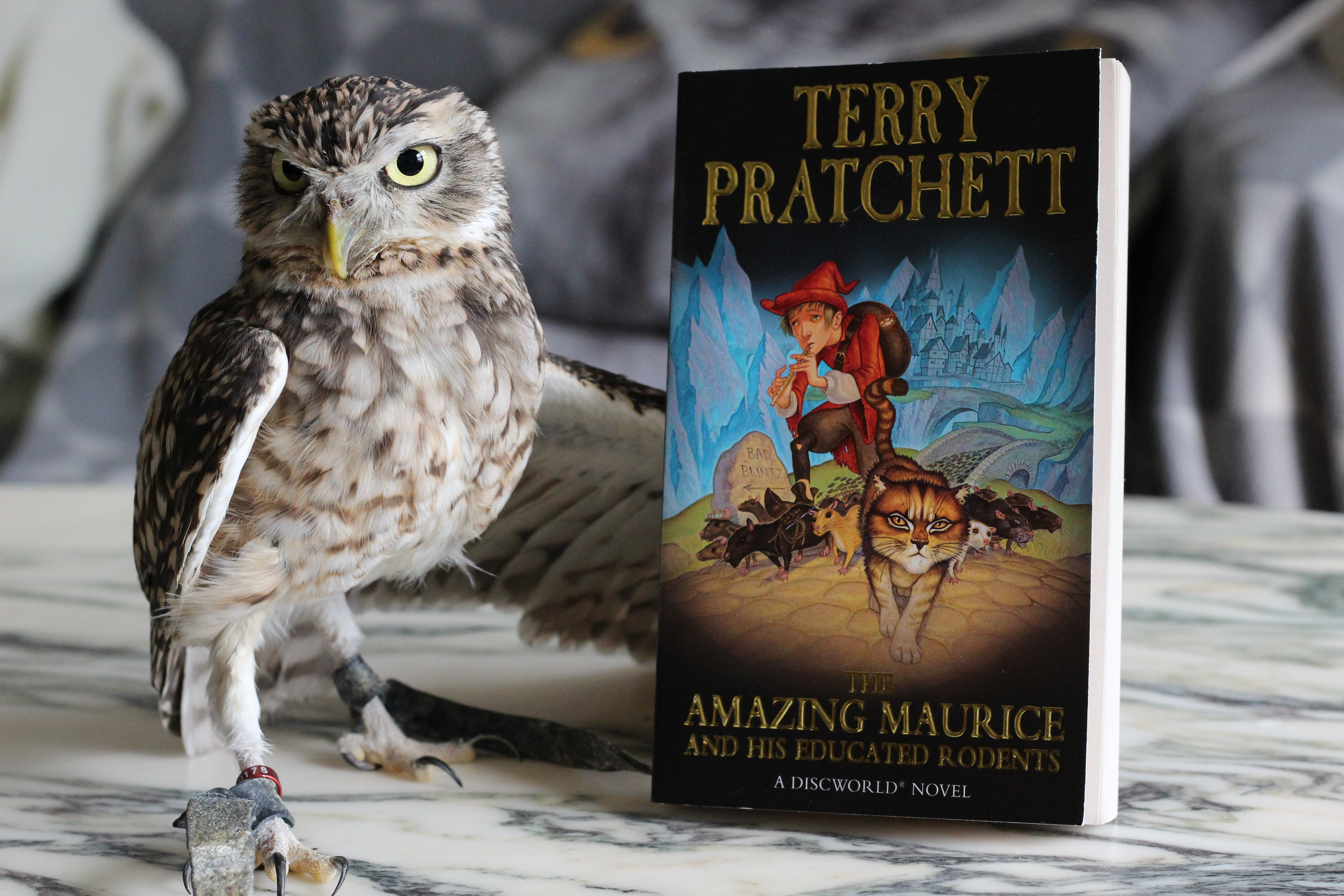 The Amazing Maurice and His Educated Rodents Terry Pratchett Owl