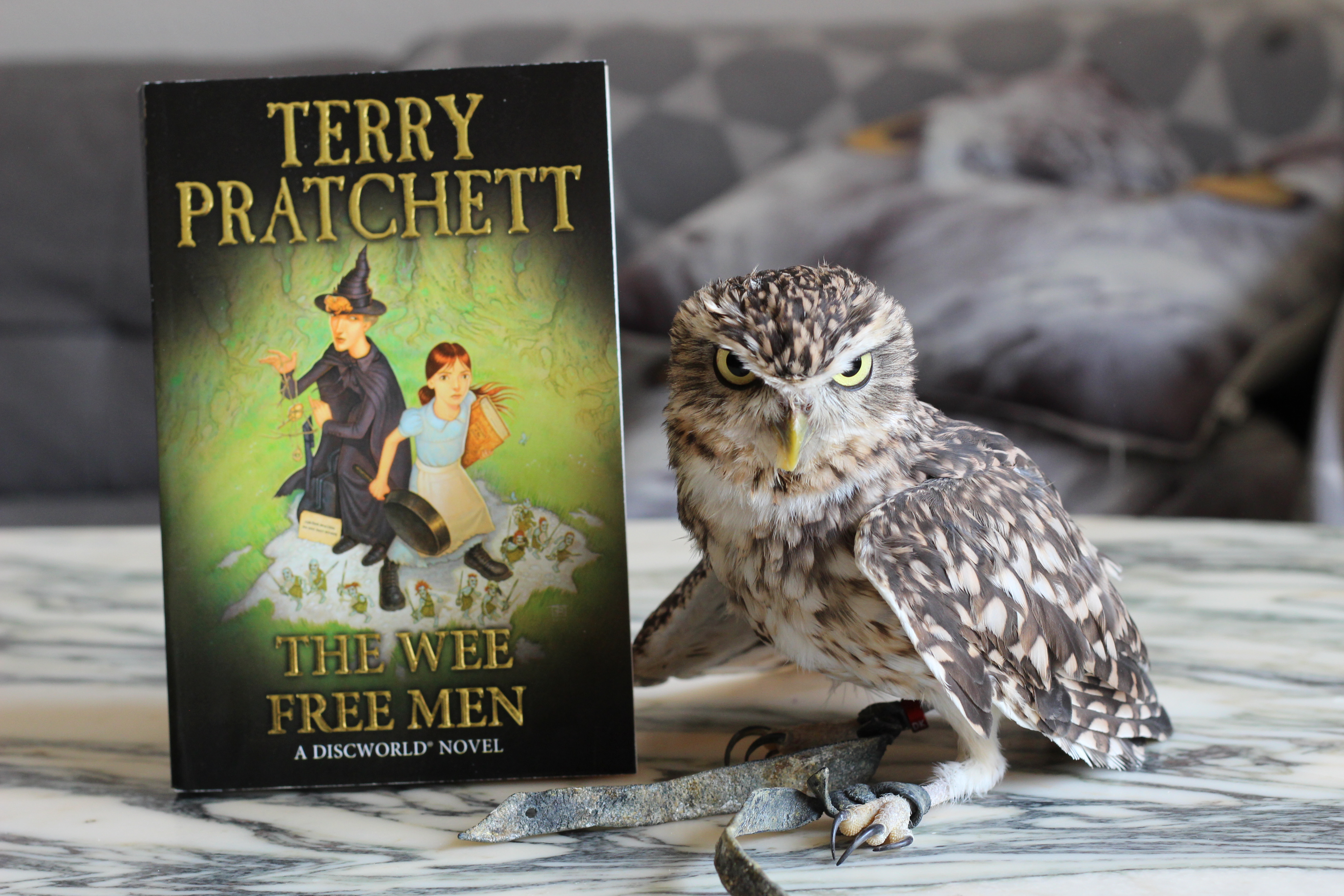The Wee Free Men Terry Pratchett owl
