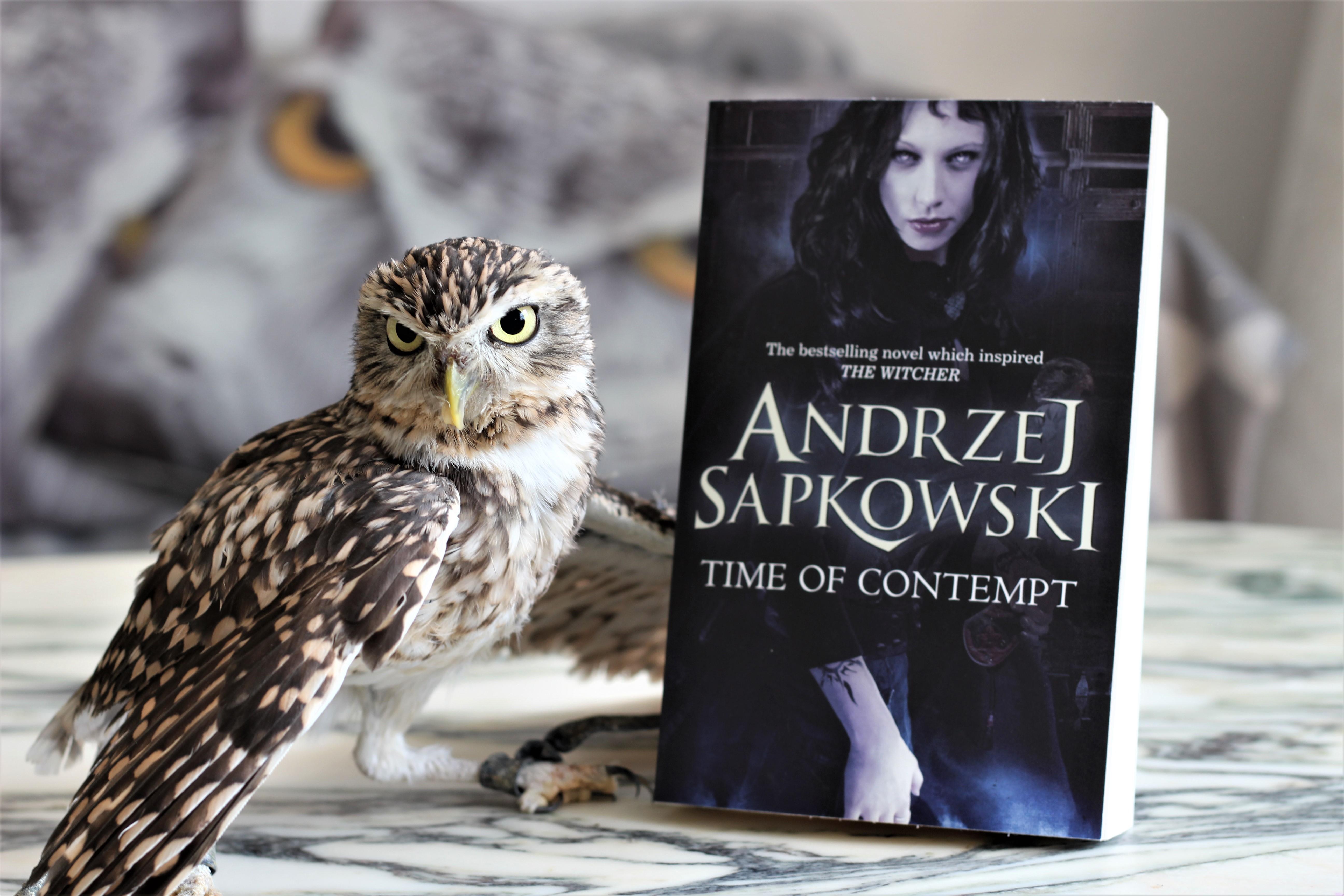 Time of Contempts Andrzej Sapkowski Owl
