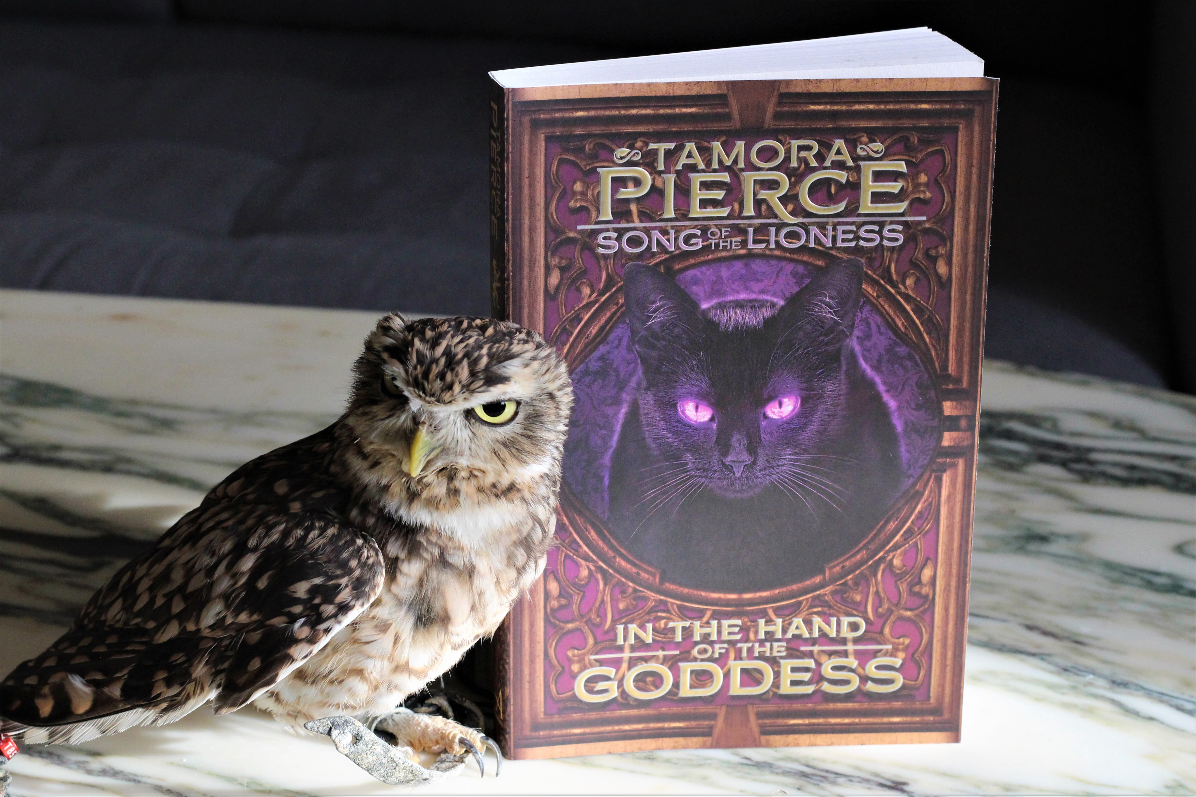 In the Hands of the Goddess by Tamora Pierce