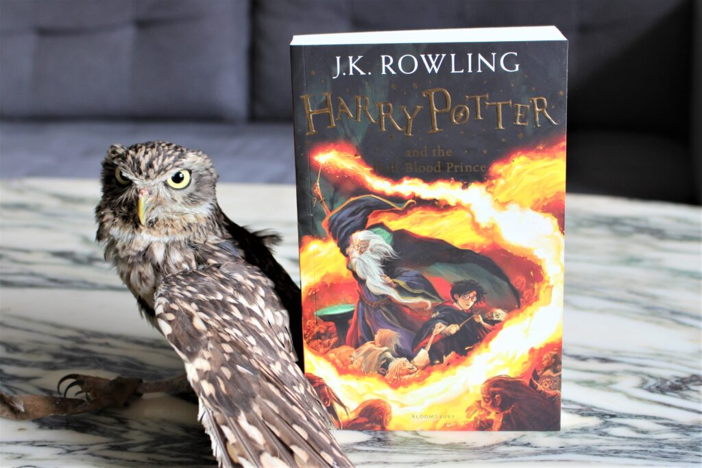 Harry Potter and the Half-Blood Prince Owl