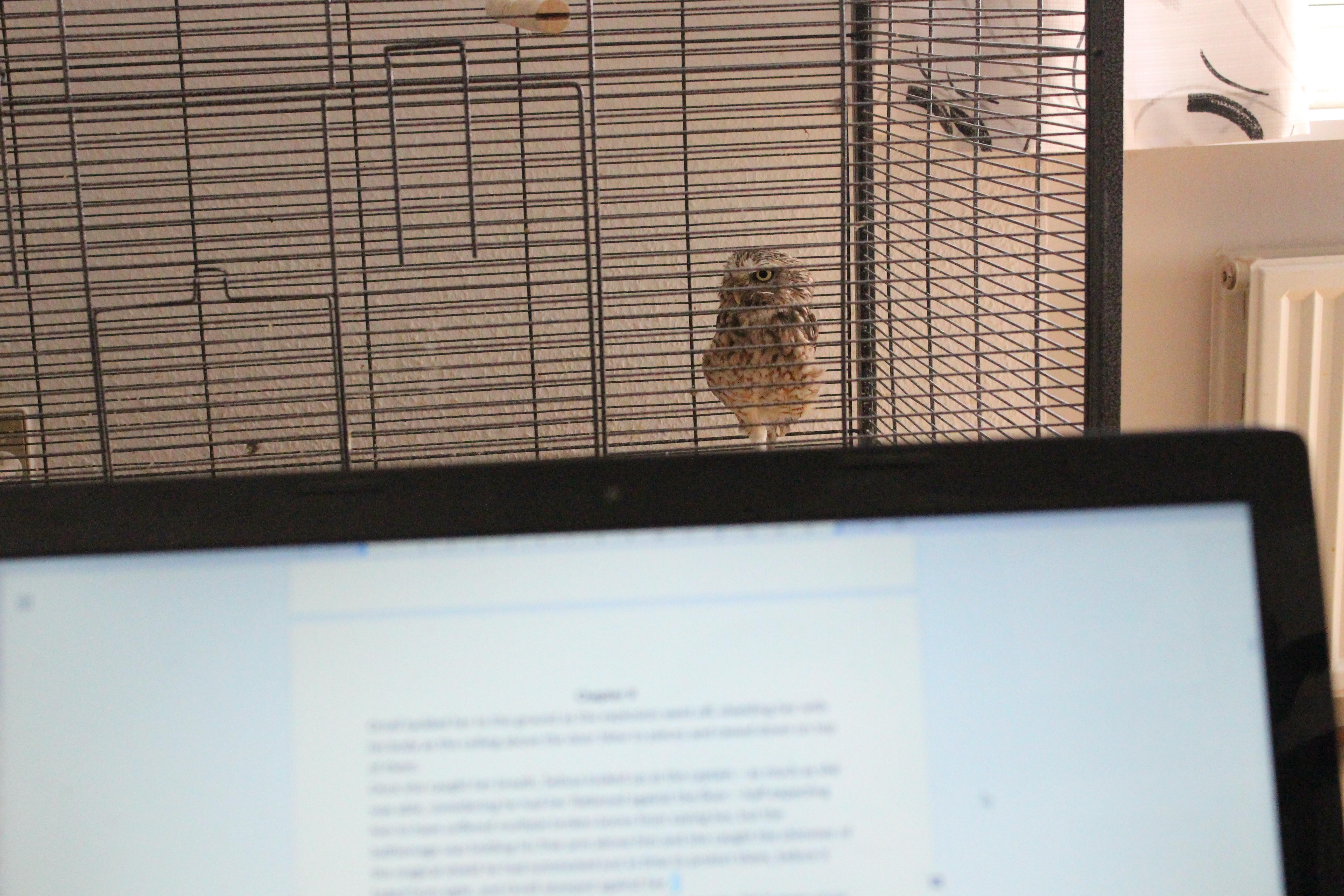 Editing Owl