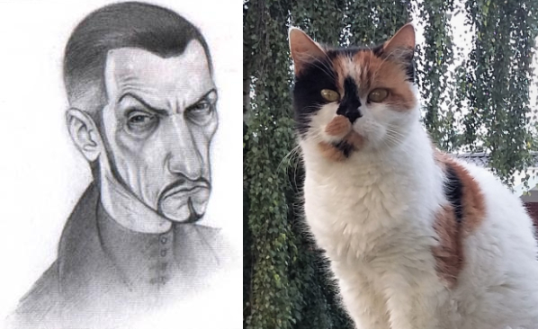 Vetinari Cat Discworld